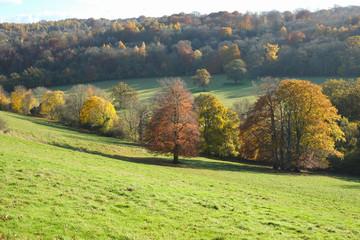 Tress in Autumn