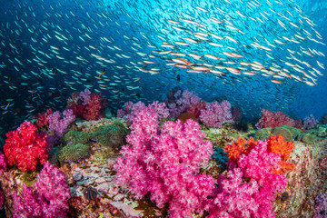 Huge numbers of colorful tropical fish swimming around a beautiful coral reef