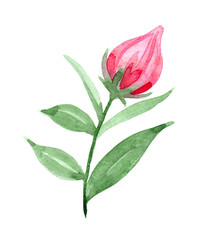 pink flower bud, watercolor hand drawn design element for polygraphy, card, wedding, poster etc.