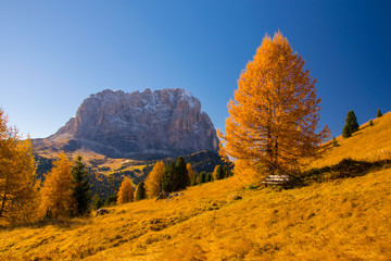 Autumn scenery in Dolomite Alps with bench under beautiful yellow larch tree and Sassolungo mountain on background