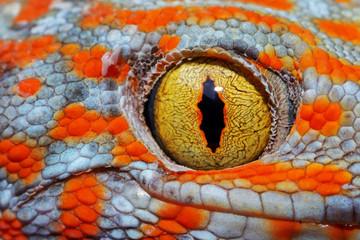 Colorful Toke's gecko amazing eye macro. Wall mural