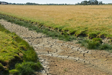 Dürre in Nordfriesland