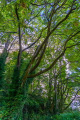 Forest Tree Branches