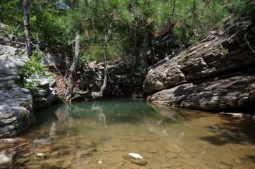 Nature's Pond