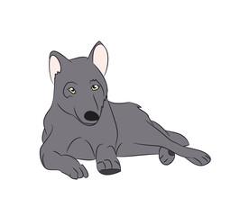 wolf asleep, color, vector