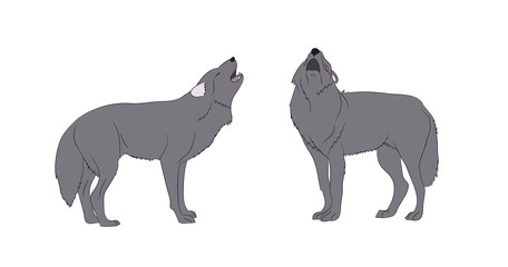 wolf howls, image in color, vector