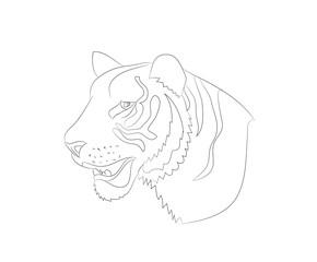 portrait of tiger lines, vector
