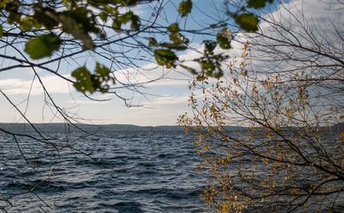 Blick durch das herbstliche Laub auf den Großen Plöner See