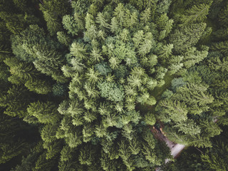 Green Trees in a Forest in Summer