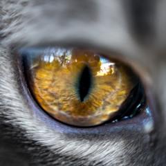 Close up sur œil de chat