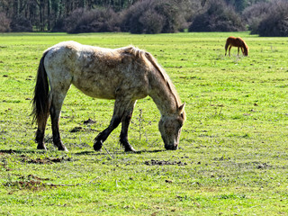 horse eating grass meadow