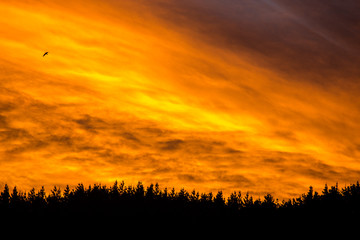 Epic fiery sunset above the tree line 1