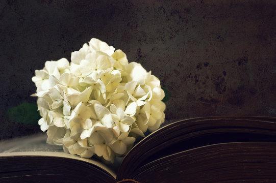 Condolence card. White snowball flower on dark grunge background