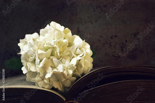 White Snowball Flower On Dark Grunge Background Stock Photo And