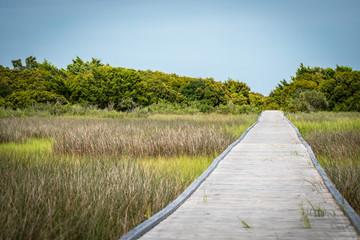 Path Through the Wetland
