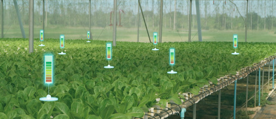 Wall Mural - the bubble chat or meter data the detect by futuristic technology in smart agriculture with artificial intelligence to improving yield, efficiency, and profitability in the farm