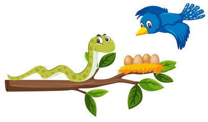A snake on the tree branch and bird