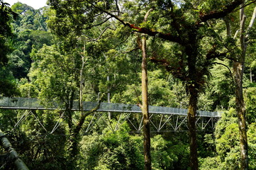 Tree top walk at Sedim, Kedah