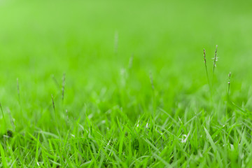 Close up green grass.