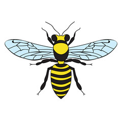 vector, isolated, insect bee