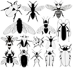 vector, isolated, silhouette black and white insect, set
