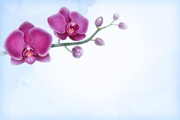 Watercolor illustration of orchids. Perfect for greeting cards or invitations