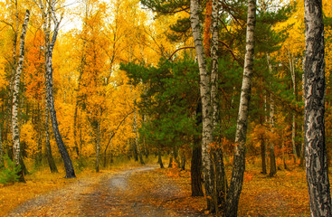 walk in the autumn forest. autumn. autumn colors.