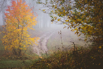 Papiers peints Forets The road in the autumnal forest among the yellow trees in the autumn misty morning_