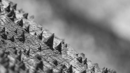 Thorny Giant, Spikes of the Ceiba pentandra Tree