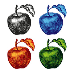 apple fruit set hand drawn illustration sketch