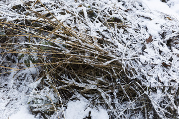 Snow Covered Twigs