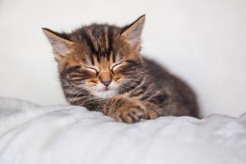Chaton endormi
