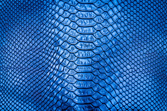Snake Skin Background   Gallery Yopriceville - High-Quality Images and  Transparent PNG Free Clipart