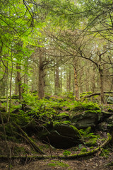 A Walking Path Through An Ancient Old Growth Forest In Pennsylvania