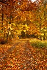 Beautiful, autumn parkland  full of colors.Pomerania ,Poland