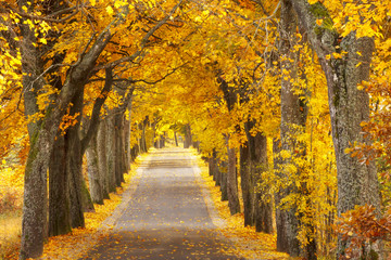 Beautiful, colorful autumn road. Pomerania, Poland