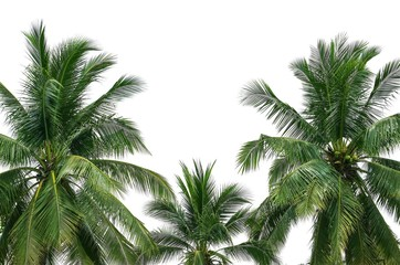 Wall Mural - Coconut palm trees isolated on white background