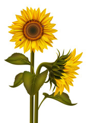Sunflowers and ladybirds