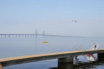 View to  Öresund bridge, Malmö beach , wooden bridge, seagull, Man