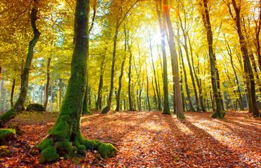 Summer forest with sun light.