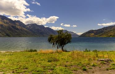 little tree on the Lake Wakatipu, New Zealand