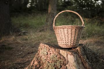 kosz, wiklina, grzyby, las, jesień, zapasy, wycieczka
