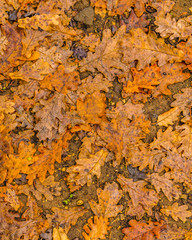 Top View Wet Leaves Background