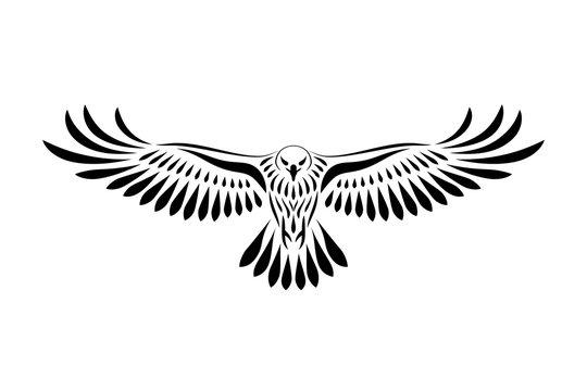 Engraving of stylized hawk. Linear drawing. Decorative bird.