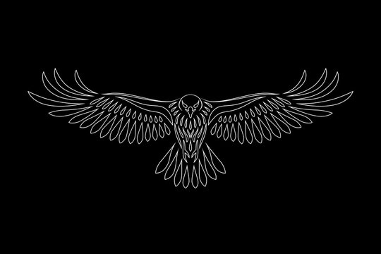 Engraving of stylized hawk on black background. Linear drawing. Decorative bird.