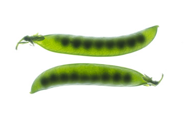 Peas in pods backlight