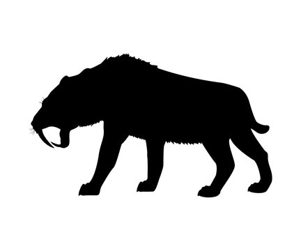Saber toothed tiger silhouette extinct mammalian animal