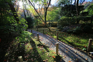 forest trail in kyoto