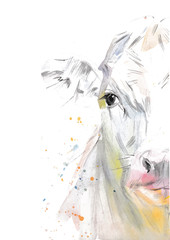 Vector illustration of a watercolor половина морды cow. Cow isolated on white background. Frontal head of a cow.