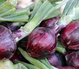 purple onion bulb in market place